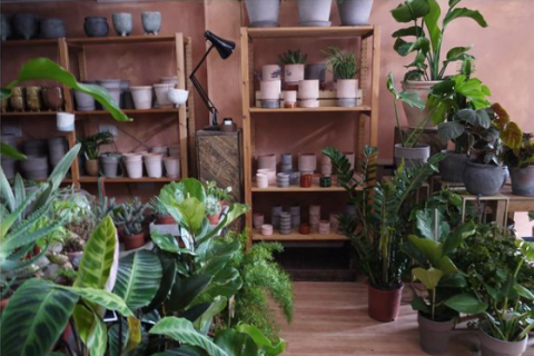 Wildflower Ouseburn stores displays plants and pots